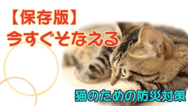 猫のための防災対策
